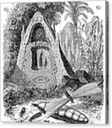 Termite Mound And Castes Acrylic Print