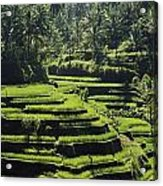 Terraced Rice Fields On Bali Island Acrylic Print