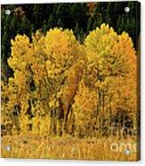 Teton Autumn Foliage Acrylic Print