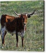 Texa Longhorn Acrylic Print