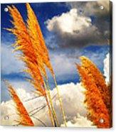 Texas Breeze Acrylic Print