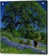 Texas Hill Country Acrylic Print