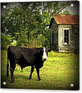 Texas Lawn Mower Acrylic Print