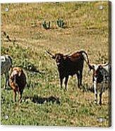 Texas Longhorns Panoramic Acrylic Print