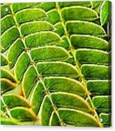 Textural Mimosa Acrylic Print
