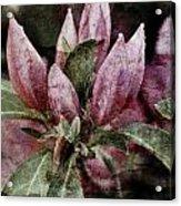 Textured Blooms 1 Acrylic Print