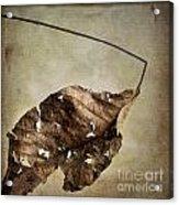 Textured Leaf Acrylic Print