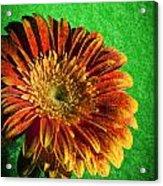 Textured Orange Flower Acrylic Print