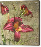 Textured Red Daylilies Acrylic Print