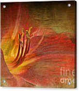 Textured Red Daylily Acrylic Print