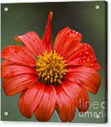 Thai Flower In Glorious Orange #2 Acrylic Print