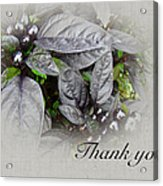 Thank You Card - Silver Leaves And Berries Acrylic Print