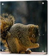 Thank You For The Nuts Acrylic Print