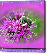 Thank You Greeting Card - Bumblebee On Ironweed Acrylic Print