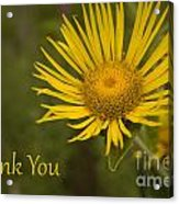 Thank You Yellow Aster Acrylic Print