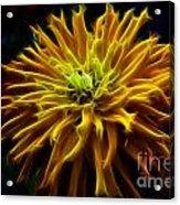 thank you Zinnia Flower Acrylic Print