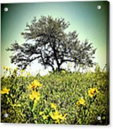 That Tree Acrylic Print