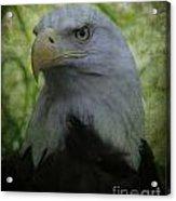 The American Bald Eagle - Lee Dos Santos Acrylic Print