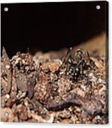 The Ant's Life Acrylic Print