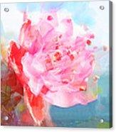 The Aura Of A Peach Blossom Acrylic Print