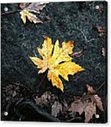 The Autumn Leaf Acrylic Print