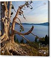 The Banks Of Crater Lake Acrylic Print
