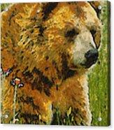 The Bear Painterly Acrylic Print