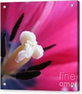 The Beauty From Inside Acrylic Print