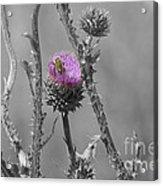 The Bee Matters Acrylic Print