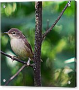 The Best Singer Of The Woods And Fields Acrylic Print