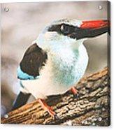 The Bird Knows Acrylic Print