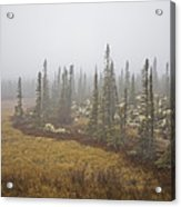 The Boreal Forest On A Foggy Day Acrylic Print