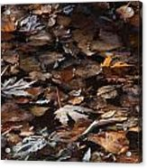 The Browns Of Fall Acrylic Print