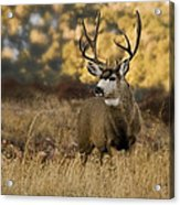 The Buck Stops Here Acrylic Print by Darryl Gallegos