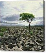 The Burren, On Kinvara Side, Co Clare Acrylic Print
