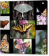 The Butterfly Collection Acrylic Print