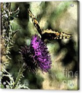 The Butterfly I Acrylic Print