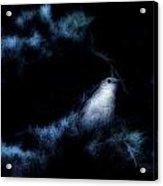 The Catbird Acrylic Print