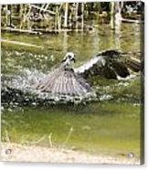 The Catch Acrylic Print