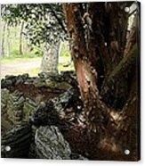 The Cedar Acrylic Print