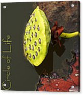 The Circle Of Life Acrylic Print