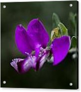 The Color Purple V2 Acrylic Print