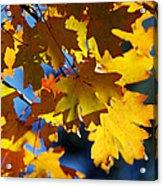 The Colors Of Autumn In Arizona  Acrylic Print