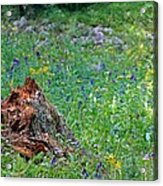 The Contrast Of Life And Decay Acrylic Print