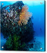 The Coral Encrusted Stern Acrylic Print