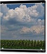 The Corn Is Thirsty Acrylic Print