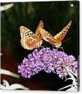 The Dancing Butterflies Acrylic Print