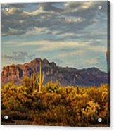 The Desert Golden Hour  Acrylic Print
