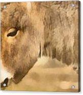 The Donkey Portrait Acrylic Print by Odon Czintos