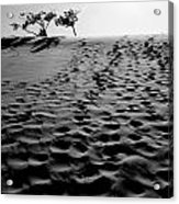 The Dunes At Dusk Acrylic Print